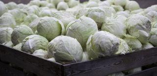 przetwórnia warzyw